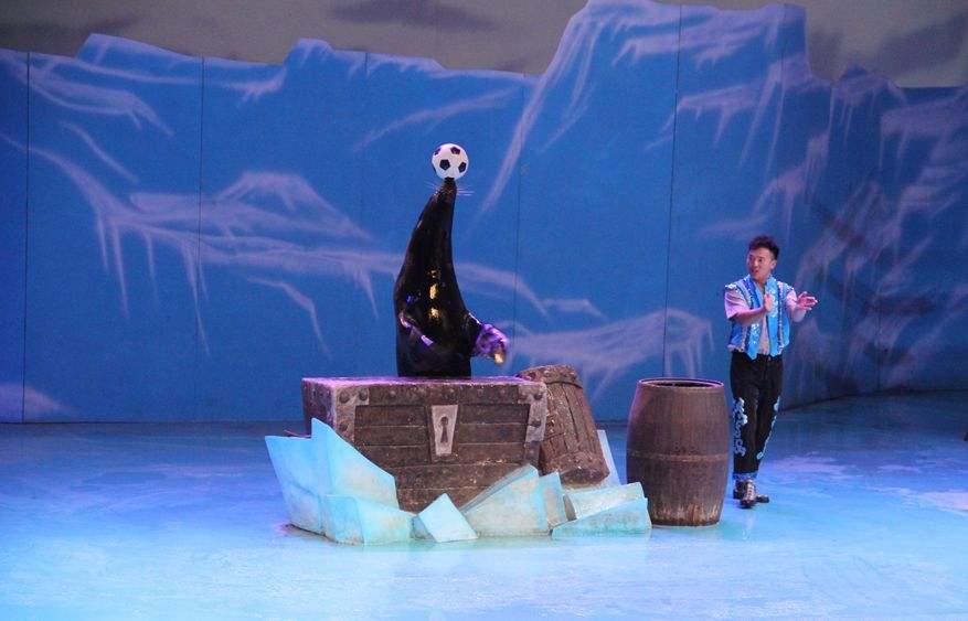 4月13号,海狮表演,紫海芳庭薰衣草庄园