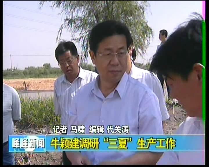 """牛颖建调研""""三夏""""生产工作"""
